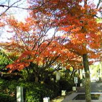石山寺詣で
