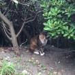 湘南 海辺に暮らす猫