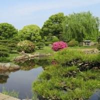 黄ショウブ咲く明石城公園