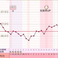 D32 高温期17日目