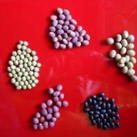 のぼる農園の 大豆・インゲン豆セット