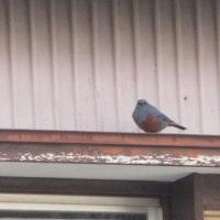 冬の鳥もやって来た