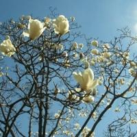 早春の花々。