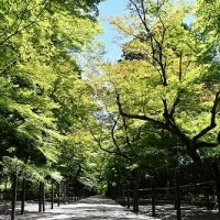総本山 光明寺