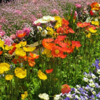 フラワーセンターの花2