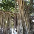 ワイキキ Waikiki 散歩