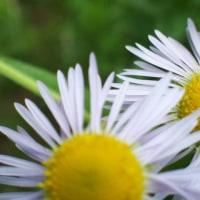 紫陽花の季節へ