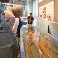 自然史資料館で二回目のゼミ会。(6/24*土)