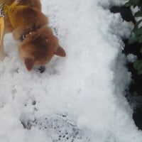 桃ちゃん、雪の中