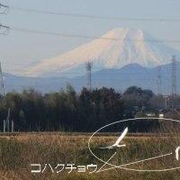 越辺川からの富士山