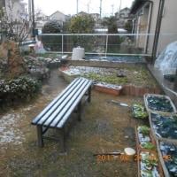 春一番の次の日は雪