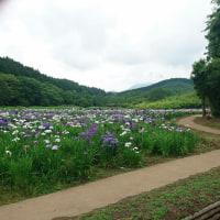 神楽女湖、菖蒲園☆