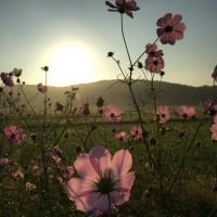 今朝の朝陽風景