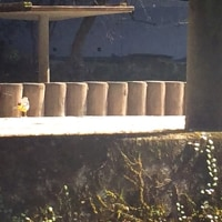 高千穂峡🏞 秋元神社・くしふる神社⛰
