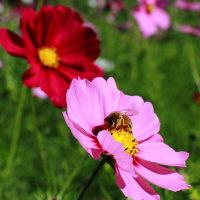 ◆秋の小花! 今日の句
