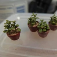 ミニチュア講座 植物その2