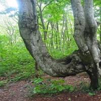 樹木が主役の写真ー15