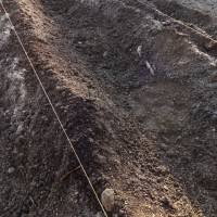 デジマ、さやあかね、レッドアンデス、タワラムラサキ、キタアカリを植え付けました