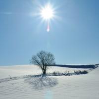 1本の木と太陽