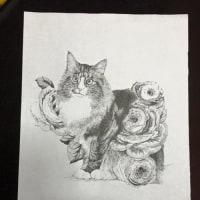 猫の眼の薔薇を含みて光りたる撫づれば薄く笑ひて噛むよ