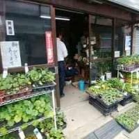 🎵 街なかの園芸店のおかみさんは、 83歳の現役ドライバー!