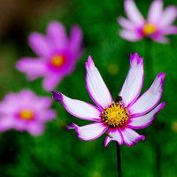 夏花のよろこび