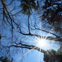 自然教育園日記 その80 頭上の風景