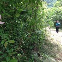 6月18日 敦賀金崎宮から中池見湿原まで