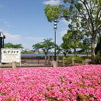 水戸「千波湖」