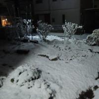 やっぱり雪が積もりました((+_+))