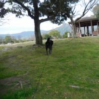 3月5日(日)福岡市動物管理センター卒業犬同窓会&わんにゃんよかイベント同時開催