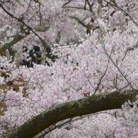 桜の話題に包まれ、GWの気配を感じる午後の森。