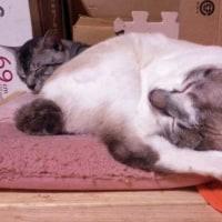 子猫の寝場所