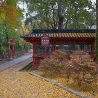 2016.11.21 根津神社: 落ち葉積もった風景
