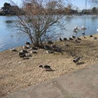 水戸の公園(2)