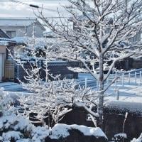 夜サラサラと降った雪が、日の出前凍り、日が出ると光り輝く