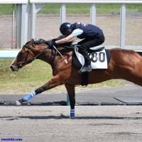 【HBAトレーニングセール2017(2歳)】の「上場予定馬」が発表!(231頭)