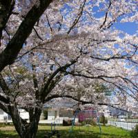 駒ヶ根の春②