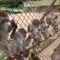 千葉の動物園、交雑種と判明し、飼育のサル57頭を大量殺戮。