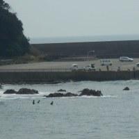 釣り人とサーファーが同じエリアで!