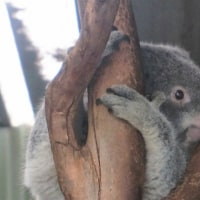オーストラリア旅行(メルボルン・シドニー)⑥