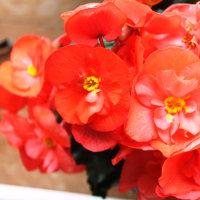 バースデイの祝い花