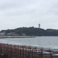 新江の島水族館行ってきました。