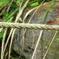 秋のファームの草花の巻