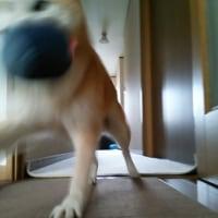 ボール遊びは現役♪