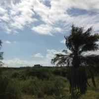 SPANDHA(すぱんだ)|西表島