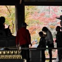 何十年ぶりの秋の長谷寺へ