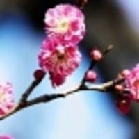 「読売編集手帳0211」より<東風吹かば・・・・・>