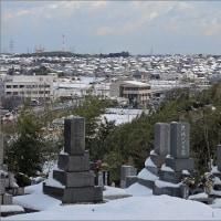 1月16日(月) 今朝も雪国