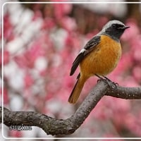 デジブック 『春はすぐそこまで』